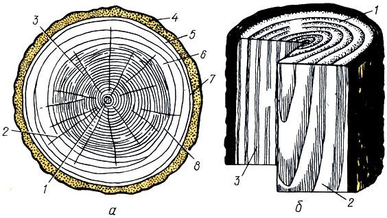 Рис. 1. Строение древесины: а - поперечный разрез ствола (1 - сердцевина; 2 - сердцевинные лучи; 3 - ядро; 4 - пробковый слой; 5 - лубяной слой; 6 - заболонь; 7 - камбий; 8 - годичные слои); б - главные разрезы ствола (I - поперечный; 2  - тангенциальный; 3 - радиальный)